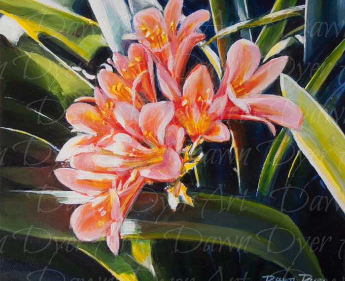 Clivia In The Day